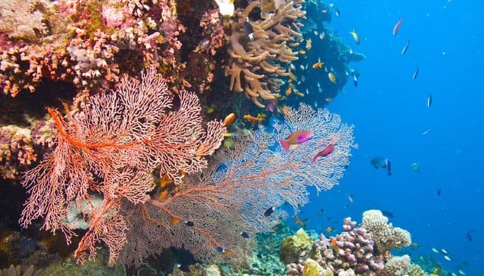 UN climate change report excludes Great Barrier reefs from in-danger list