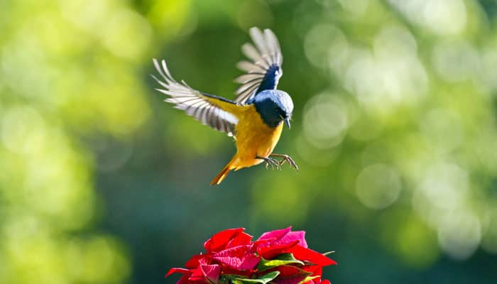 Bird lovers can head to this sanctuary near Gurgaon