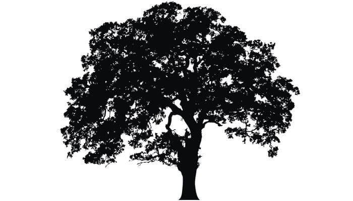 'Virgin Tree', Damdami Mata help you find love! Details inside