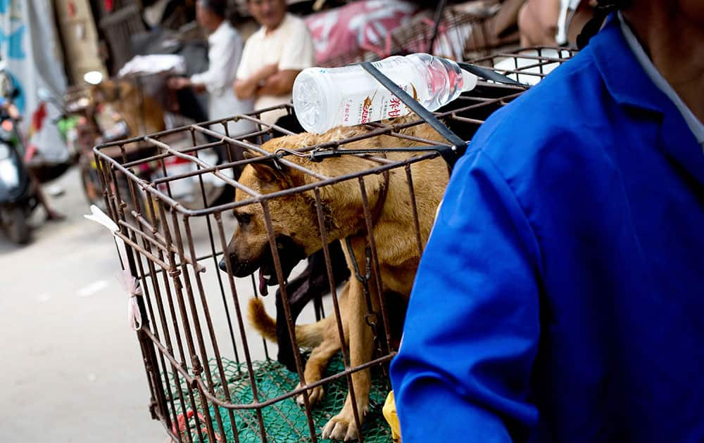 A vendor with a load dogs arrives at a market