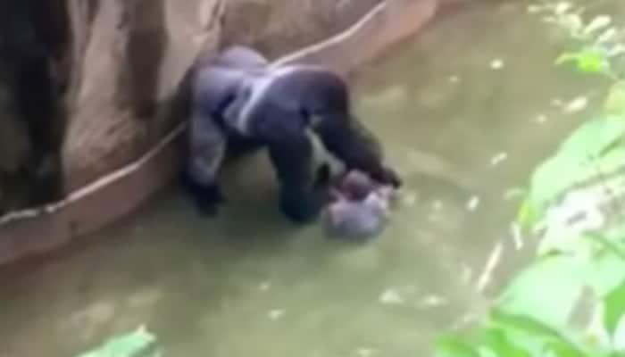 Baby falls into gorilla enclosure... what happens next is bone-chilling - WATCH video