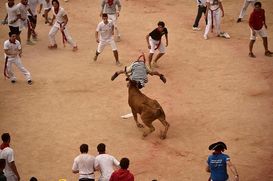 A reveler jumps over a cow