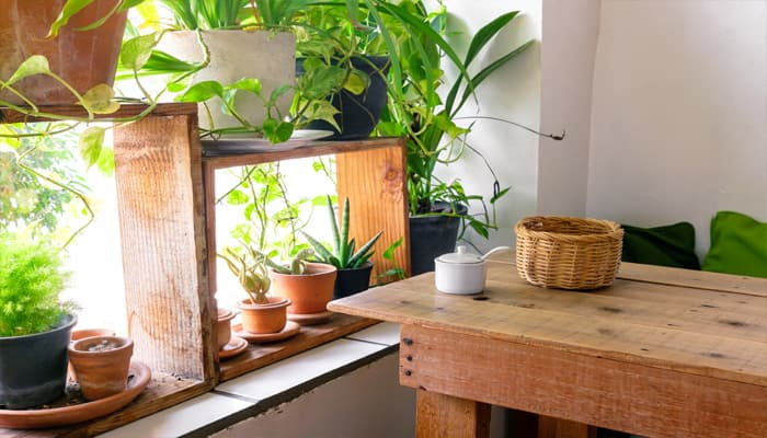 NASA approved top six magical houseplants that improve indoor air quality- Photo feature!