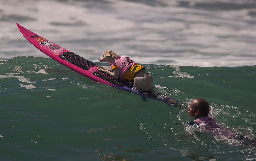 A surfing dog