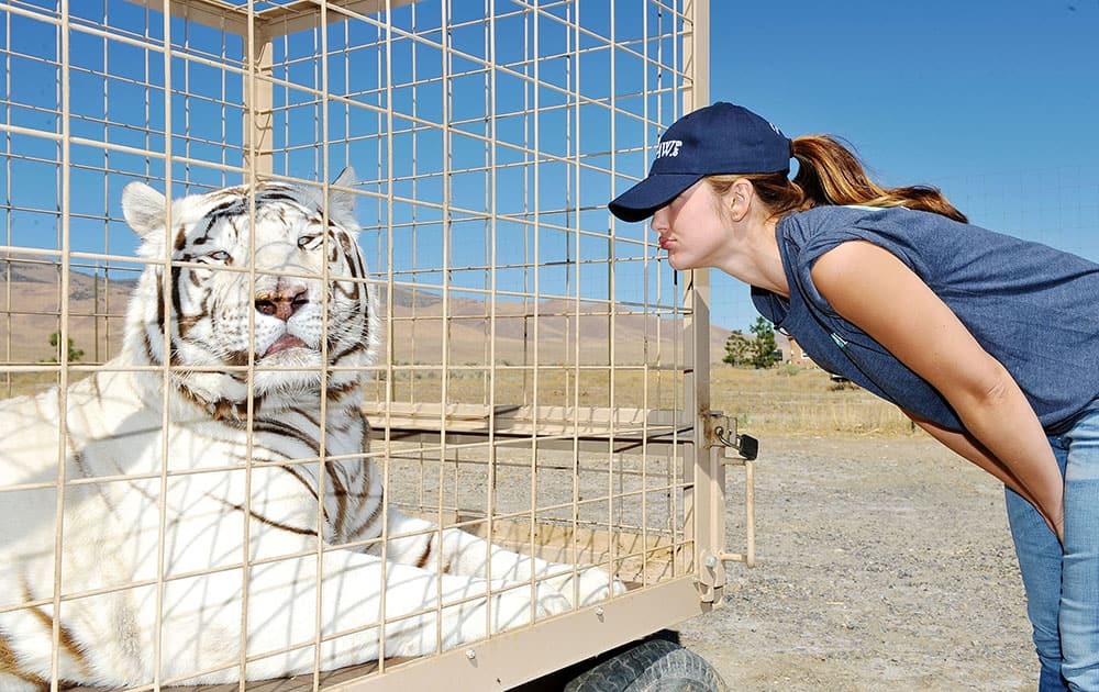 Minka Kelly Visits Rescued Lions, Tigers And Other Big Cats With the IFAW