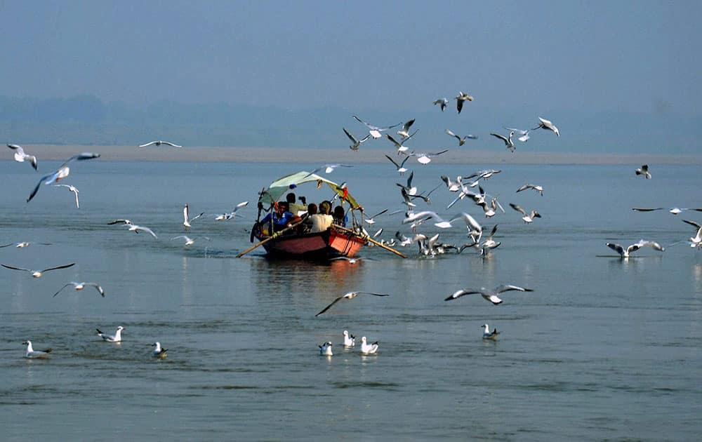 Siberian birds flying over the Ganges