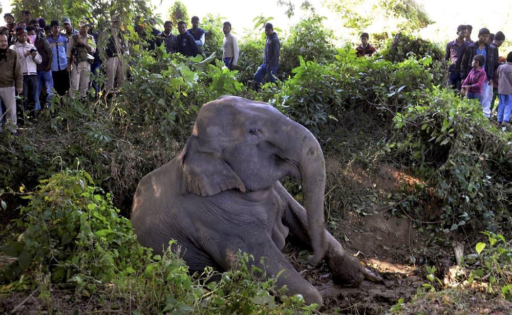 Elephants hit by a train