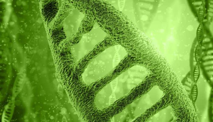 Molecular mechanism that may cause autoimmune diseases found
