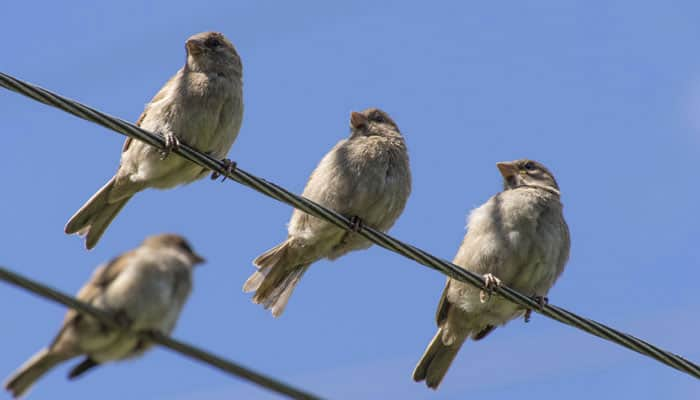 Birds become more vulnerable to predators due to traffic noise