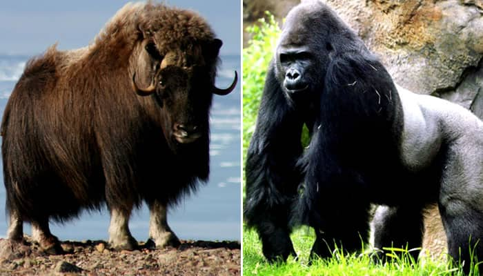 Top 10 Strongest Animal in the World | News