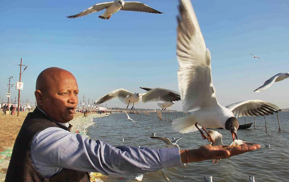 Devotee feeds Migratory Siberian seagulls