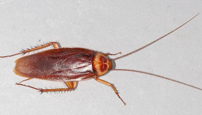 Bizarre! Live cockroach found in Chennai woman's head