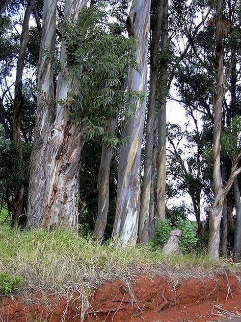 Rullah Longatyle (Strong Girl) – Tasmania, Australia