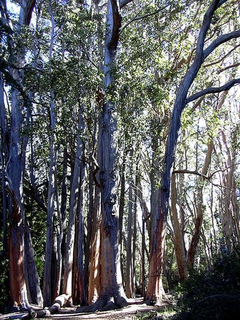 Gothmog – Tasmania, Australia
