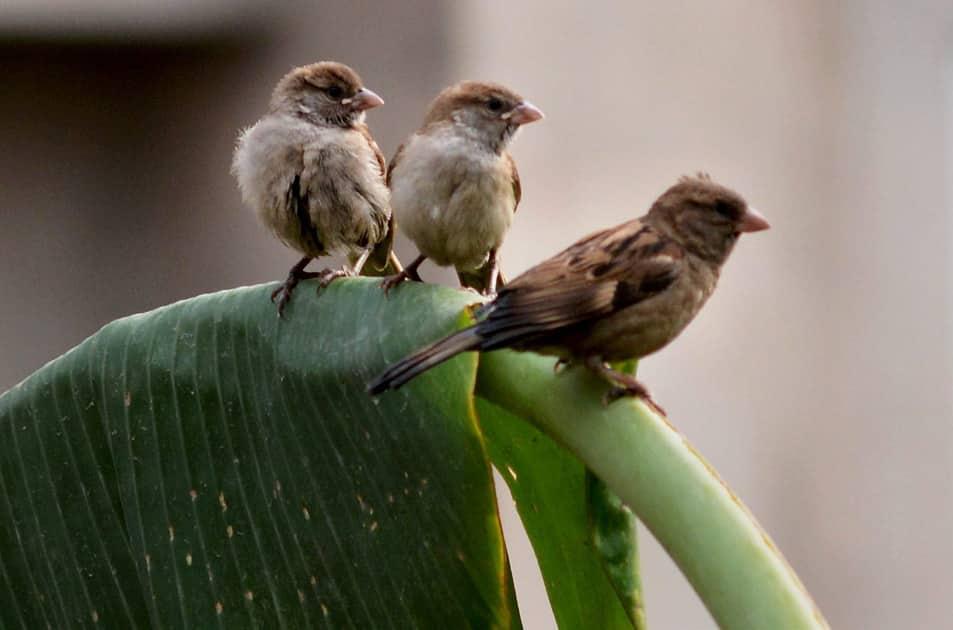 World Sparrow Day in Guwahati