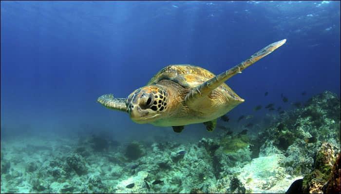 Boy Or Girl Baby Sea Turtles Have No Gender, Says Study -9045