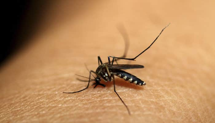 Malaria infection can cause chronic bone loss