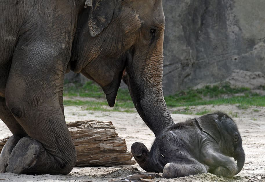 Baby elephant at Cologne Zoo