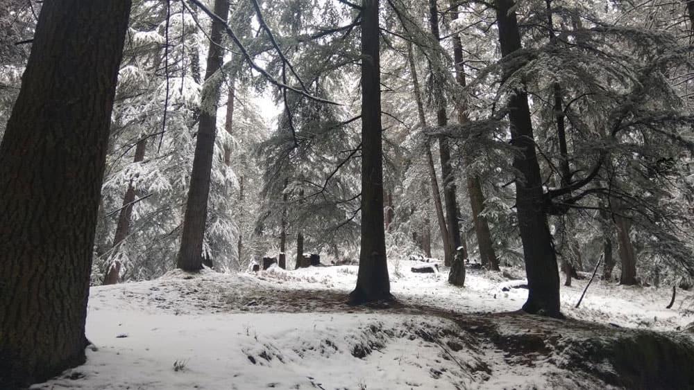 Snow covers Shimla's Tikkar area of Nawar valley, Himachal Pradesh.