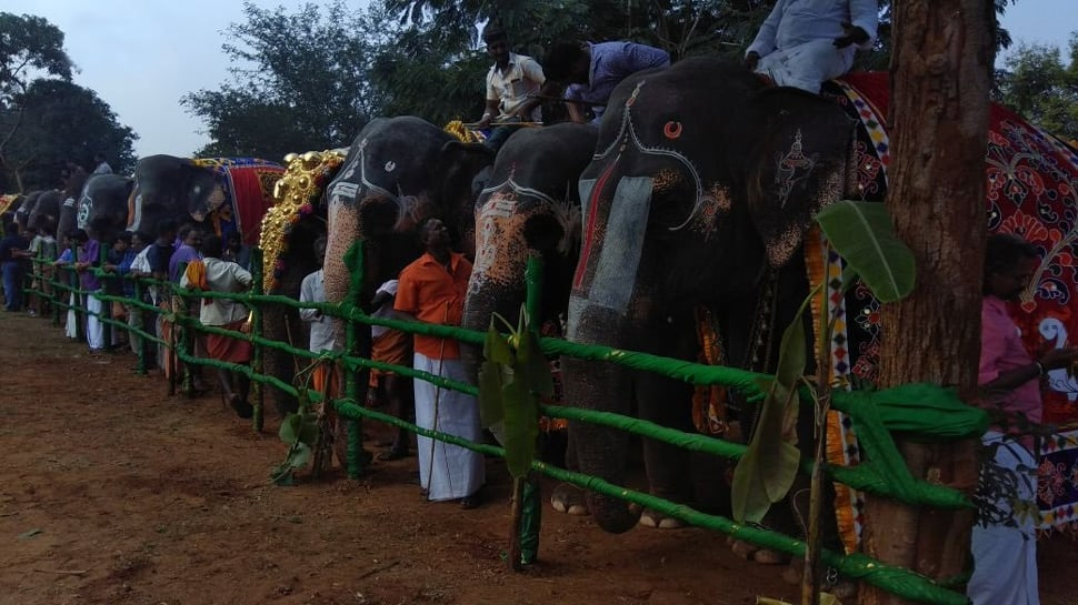 Tamil Nadu: 48-day annual rejuvenation camp for temple elephants begins