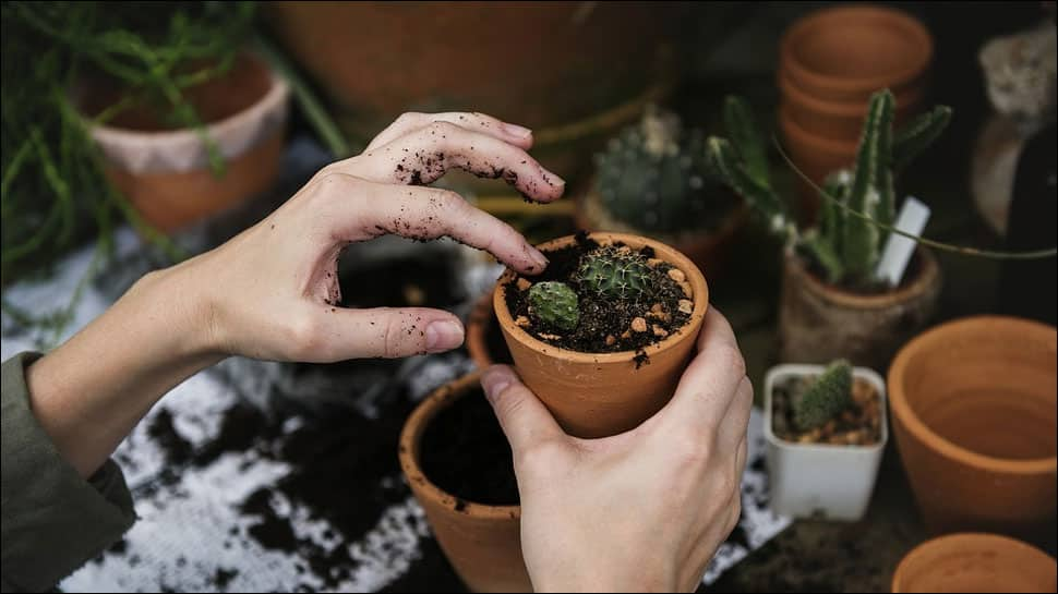 Dig your way to good health: Gardening can help old people remain healthy