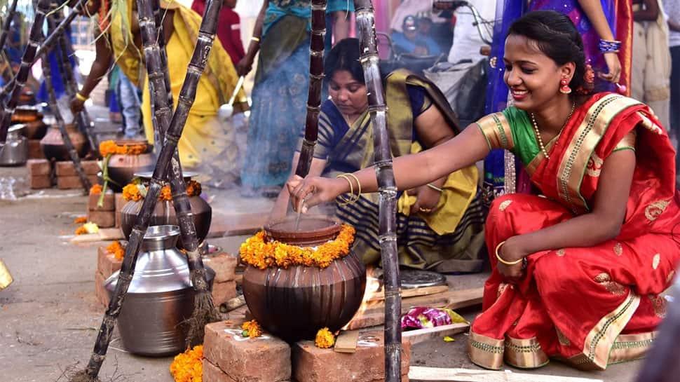 Pongal celebrated in Tamil Nadu, Puducherry; Jallikattu peps up festive zeal