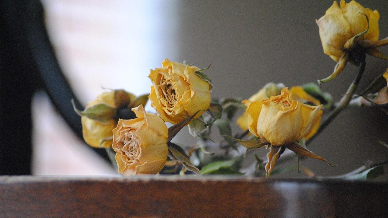 Worst Valentine''s Day gifts revealed