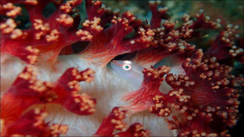 Australia has lost almost 99% of its crustacean reefs: Study