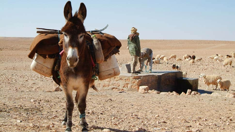 Donkey bomb: Animal with bomb strapped to its back injures 2 Afghan policemen