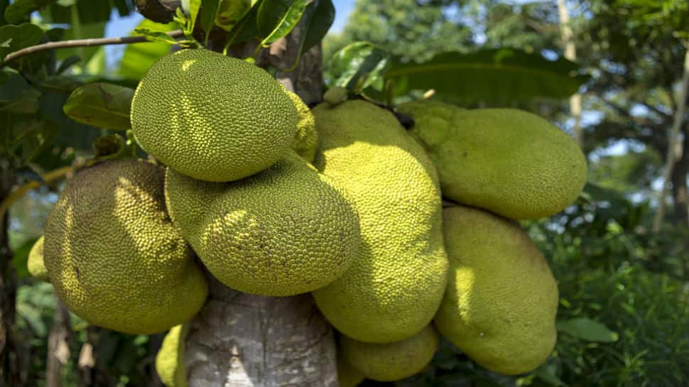 Kerala all-set to get an official fruit