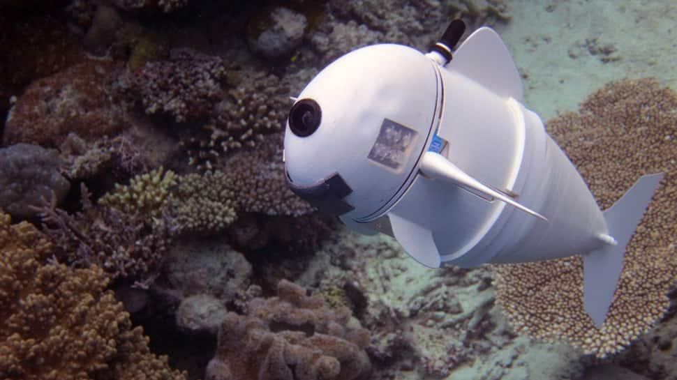 Meet SoFi, the silicon robotic fish built to study marine life
