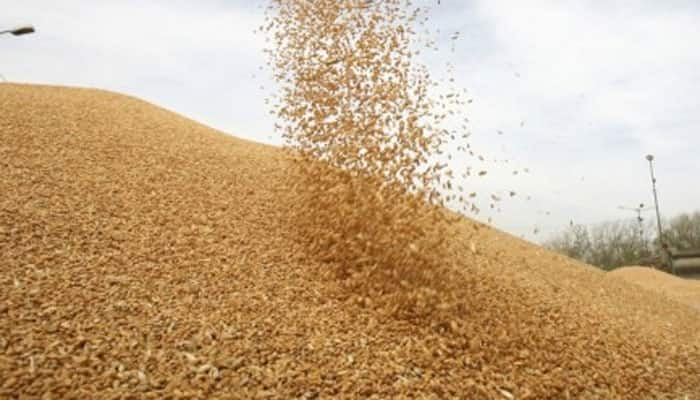 India under-reported its market price support for wheat, rice: US tells WTO