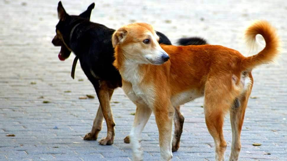 Sitapur stray dog attacks: SC seeks report from UP govt on alleged culling of canines