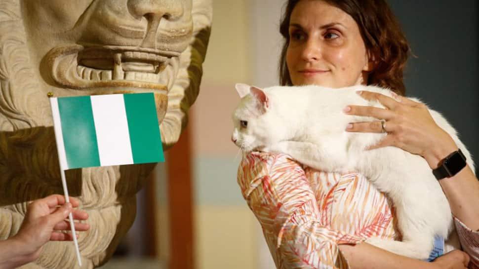 Feline fortune teller Achilles predicts Nigeria to beat Argentina
