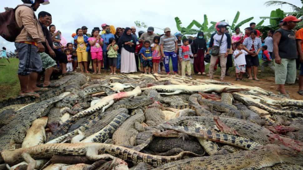 Crocodile kills man, mob slaughters 292 crocodiles in ...