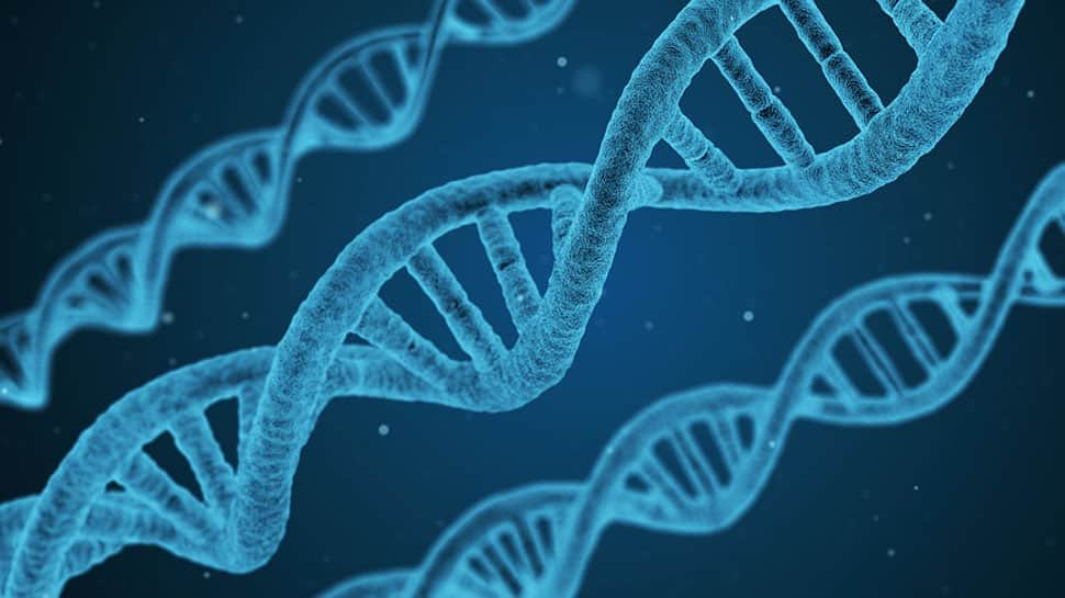 Chinese scientists create first single-chromosome yeast