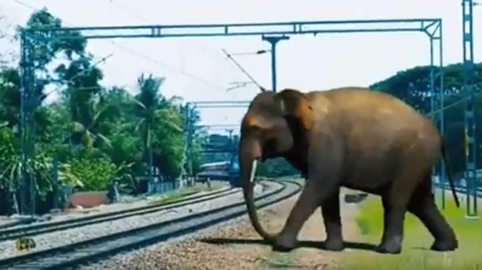 Plan Bee: Indian Railways launches drive to save elephants from accidents