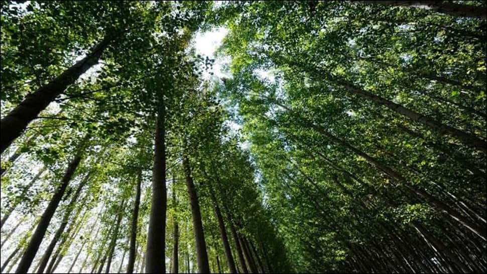Over 50,000 trees to be axed in Uttar Pradesh's tiger habitat