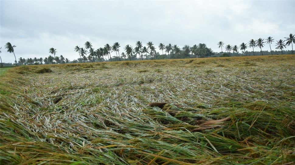 Cyclone Phethai wreaks havoc in Andhra, crops across 14,000 hectares damaged