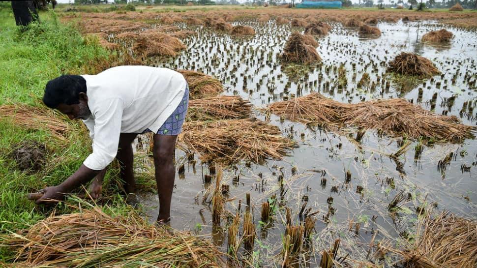 Cyclone Phethai has affected 5,602 farmers, paddy fields destroyed: Chandrababu Naidu