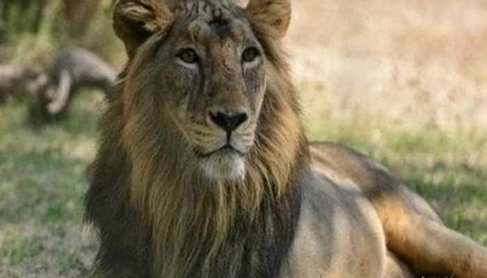 Government launches Asiatic Lion Conservation Project