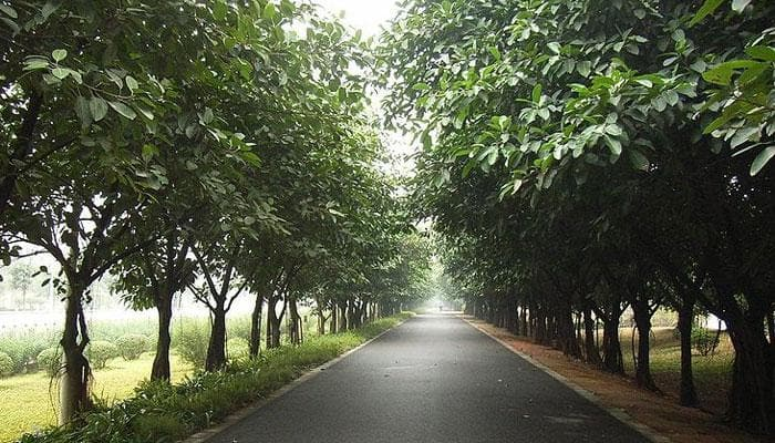 Planting roadside hedges may combat pollution exposure