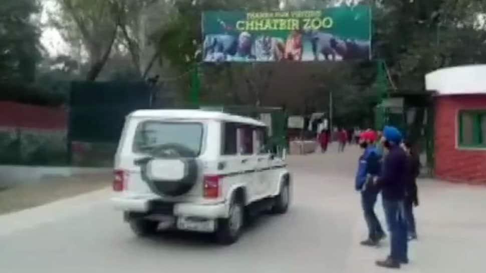Punjab man jumps inside lions' enclosure, gets mauled to death
