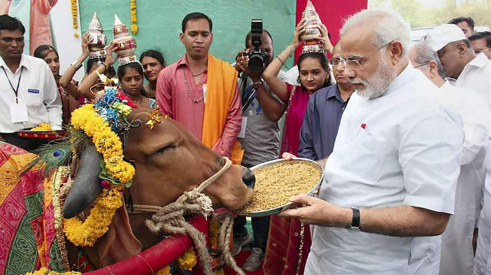 Rising number of stray cows add to PM Narendra Modi's farmer woes as Lok Sabha election looms