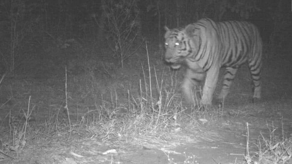 Tiger sighted in Gujarat for the first time in three decades