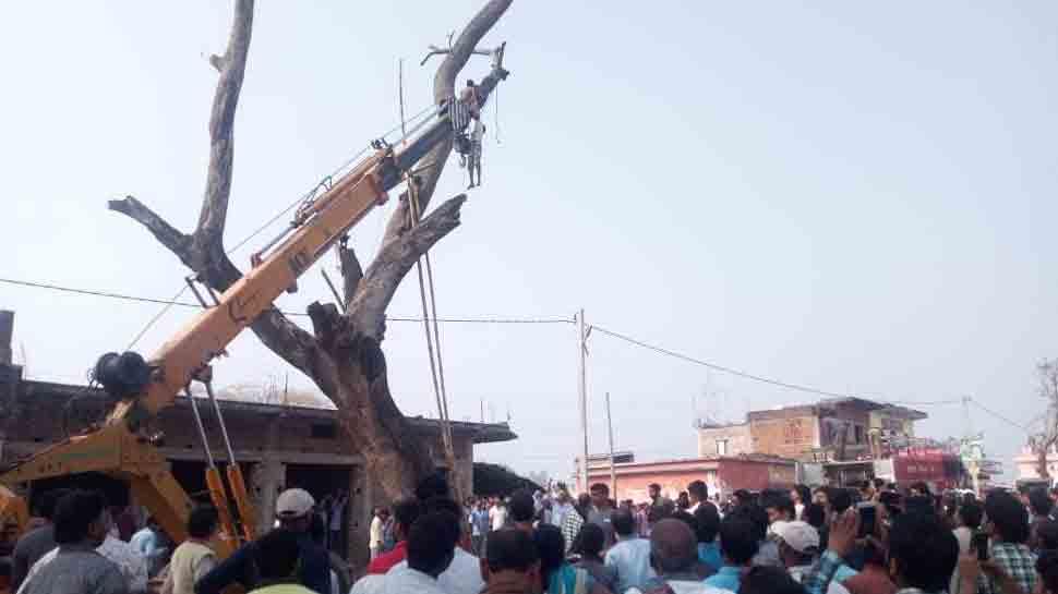 Jharkhand: Man climbs 40-feet high tree to catch parrot, breaks wrist, gets stuck