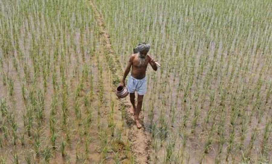 States with highest and lowest production of foodgrains in last 4 years