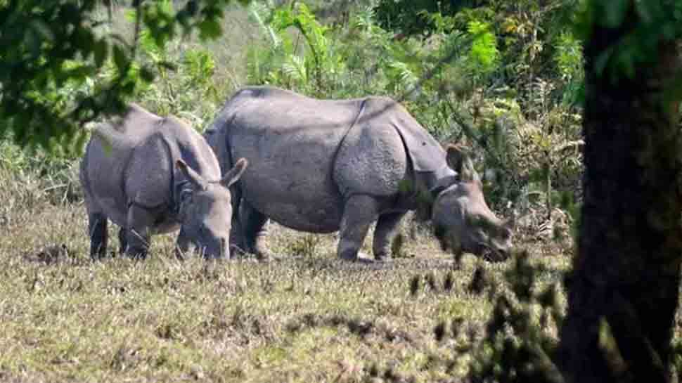 Rhino carcass recovered from Assam's Kaziranga National Park