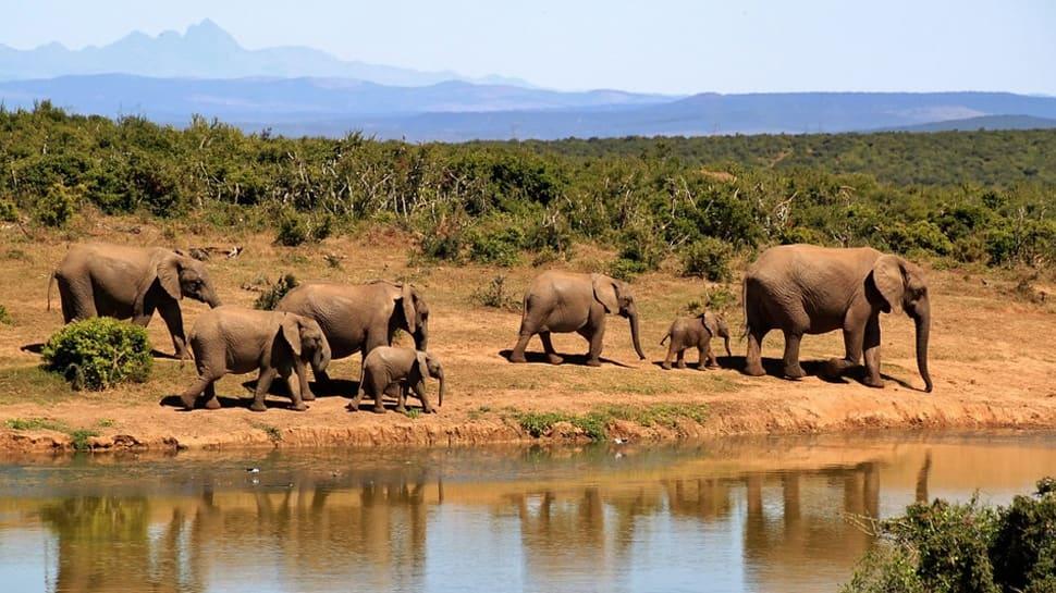 Chhattisgarh: 2 killed in elephant attacks, toll reaches 5 in three days
