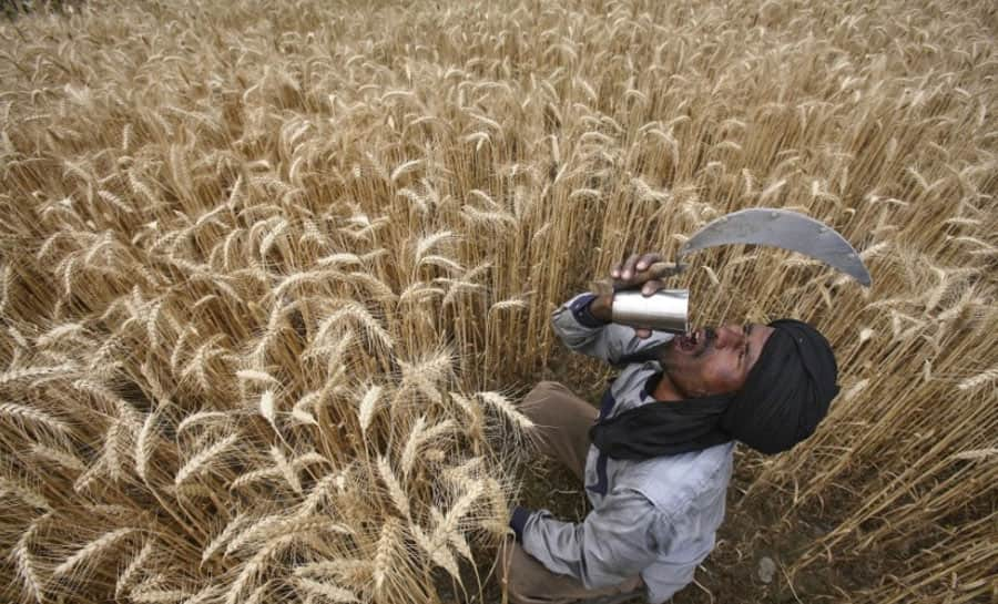 FCI to sell 10 million tonne of wheat to bulk consumers this fiscal